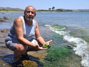 Datça'da deniz kirliliği uyarısı