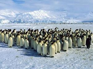 Antarktika'daki ekosistem ciddi tehdit altında