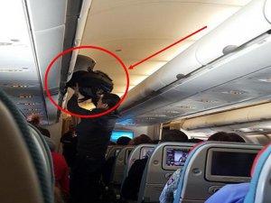 THY uçağında hırsızlık şoku!