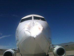 THY uçağına AHL'ye inişte kuş çarptı