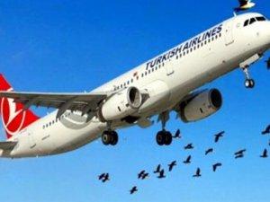 THY uçağı kuş sürüsüne çarptı