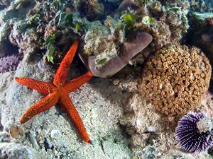 İzmir Körfezi'nde oksijen seviyesi artı, canlı türleri çoğaldı