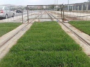 Tramvay hattında çimden yeşil hat çekiliyor