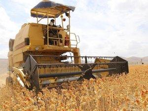 Gıda Tarım ve Hayvancılık Bakanı Çelik: Üreticilere 550 milyon liralık ödeme yapılacak