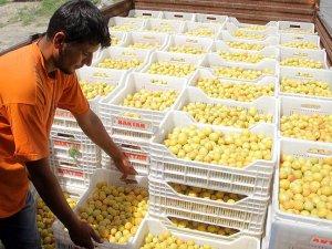 Rusya'dan Türk gıda ürünlerine yönelik ilk karar çıktı