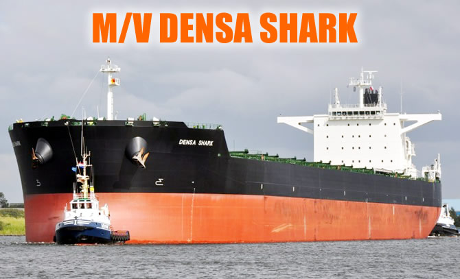 densa_shark_buyuk.jpg
