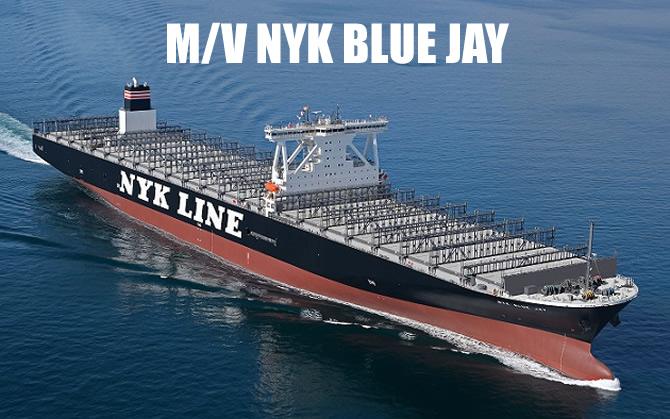 nyk_blue_jay_buyuk.jpg